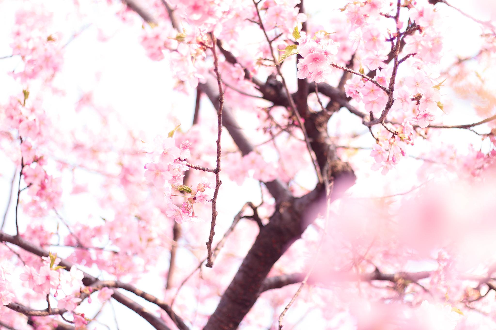 レジンBOT企画「春レジン企画」