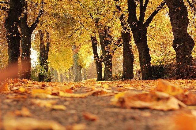 秋のプラバン企画