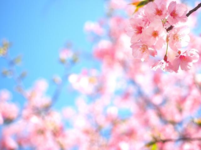 レジンBOTツイッター企画『春のレジンBOT企画』
